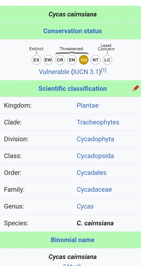 cycas cairnsiana